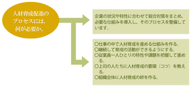 人材育成プロセスの概要